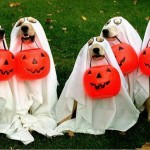 dog-ghosts