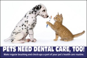 pet_dental_health
