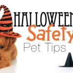Halloween Safety Pet Tips